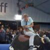 Bayerisches Bullenreiten Bullriding bayrisch