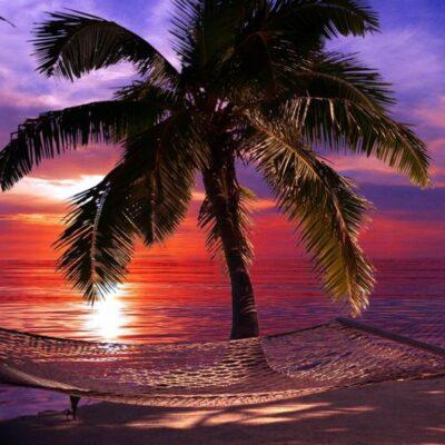 Beachparty Dekovorhang Hängematte Lila Vermietung Fotowand