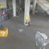 Drohnen Parcours FPV mieten mit speziell angefertigten Hindernissen für BVB Videodreh youtube