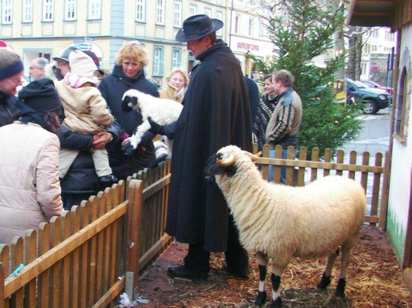 Weihnachtskrippe XXL Weihnachtsmarkt Fulda mit echten lebenden Schafen und Schäfer