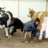 Wettmelken mieten bayrisch Melkwettbewerb